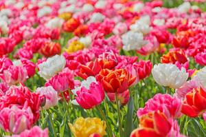 bright-vivid-flowers.jpg